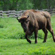 Wildpark Wisent Hoyer